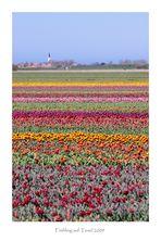 Frühling auf Texel 1