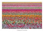 Frühling auf Texel 2 (reload)