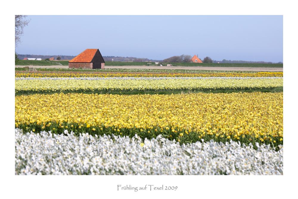 Frühling auf Texel 3