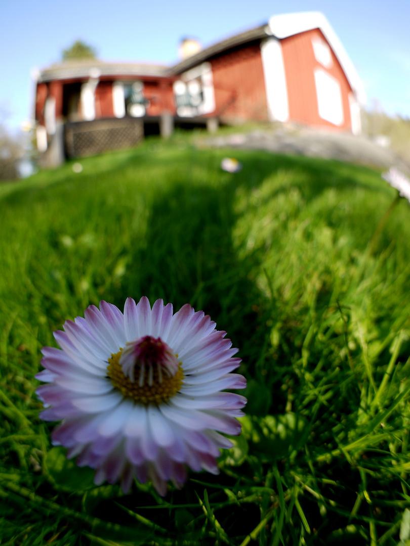 Frühling aus einer anderen Sicht...........................
