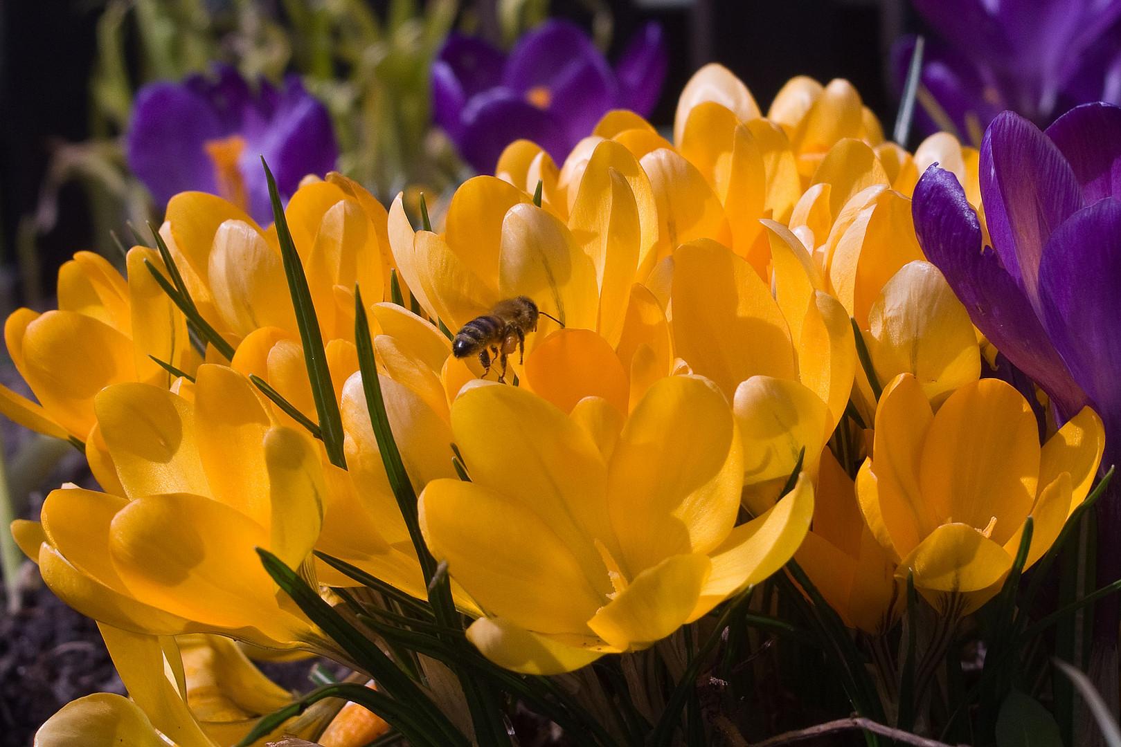 Frühling ....