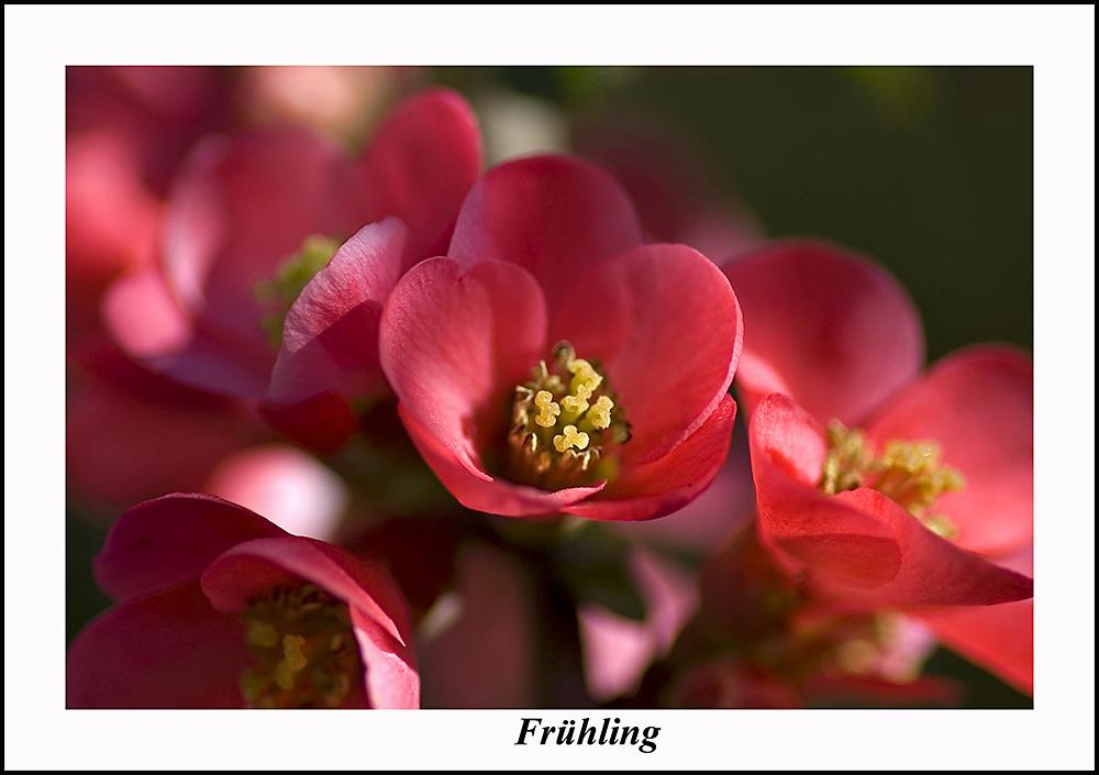 """""""Frühling"""""""