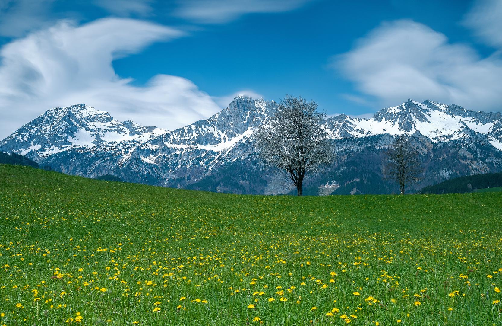 Frühling bei mir....