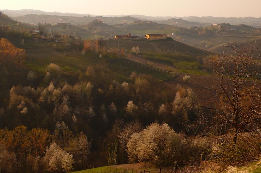 Frühling bei Monforte, Piemont