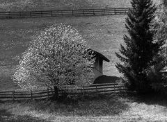 Frühling bei Vöran