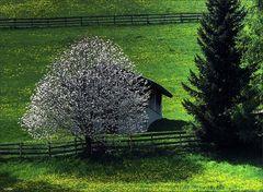 Frühling bei Vöran - color