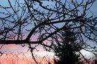 Frühling beim Sonnenuntergang