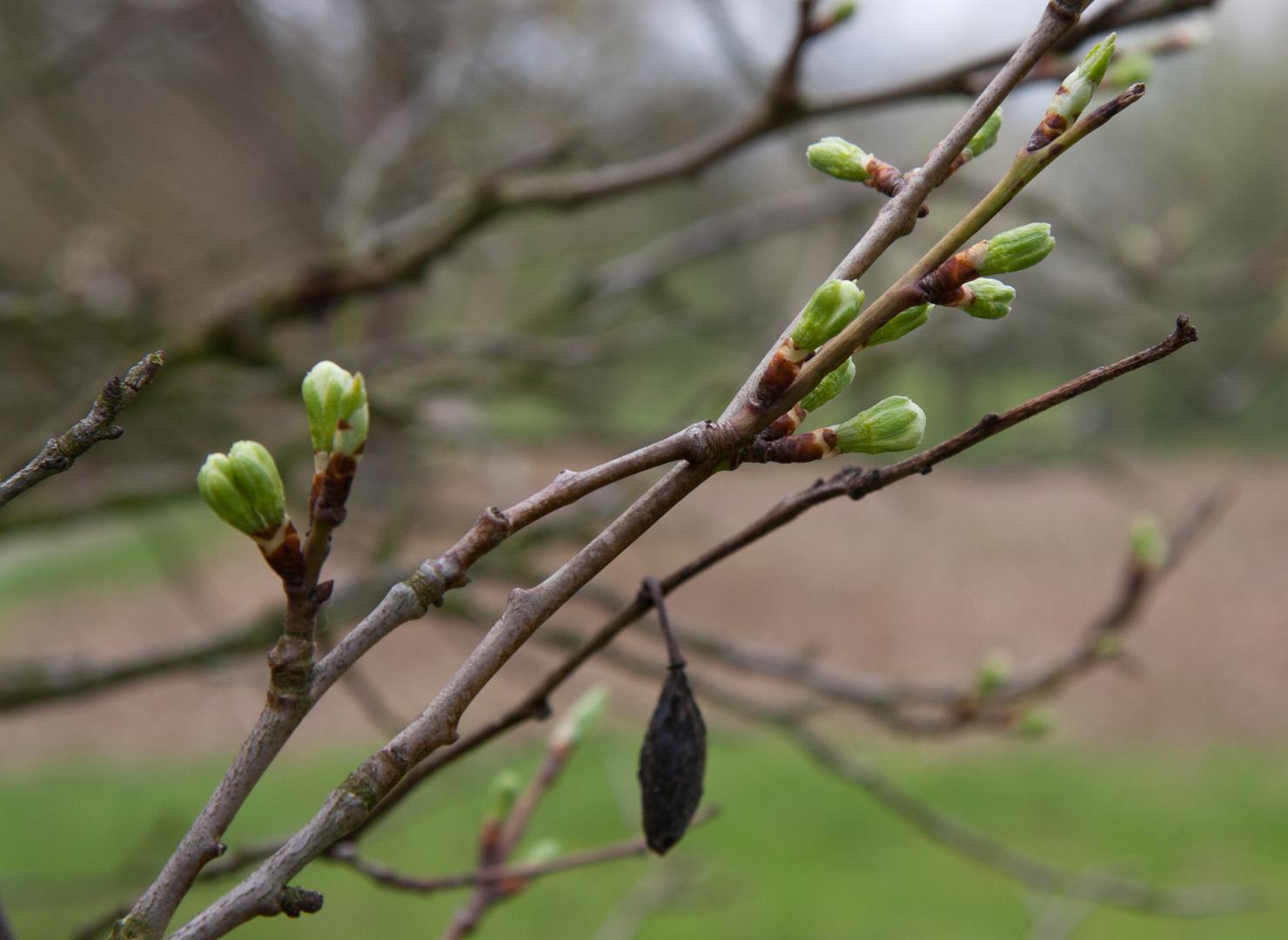 Frühling besiegt Herbst........
