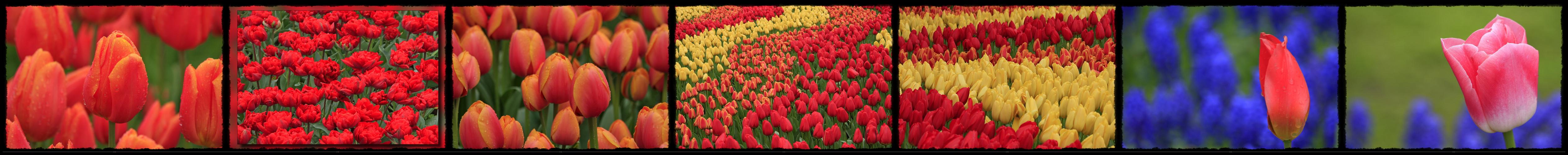 Frühling............