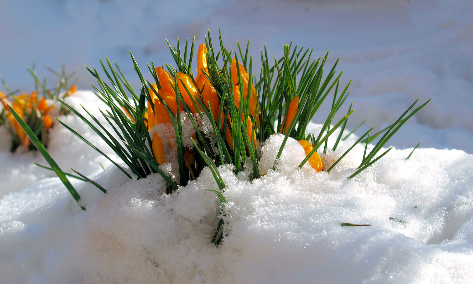 Frühling ..bitte jetzt...
