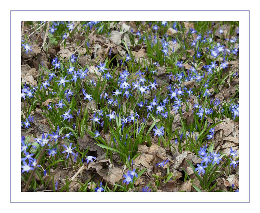 Frühling blau