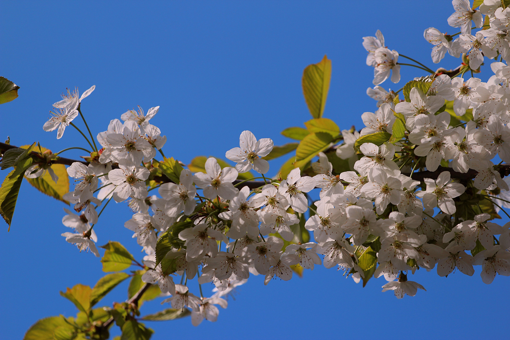 Frühling blau-Weiß