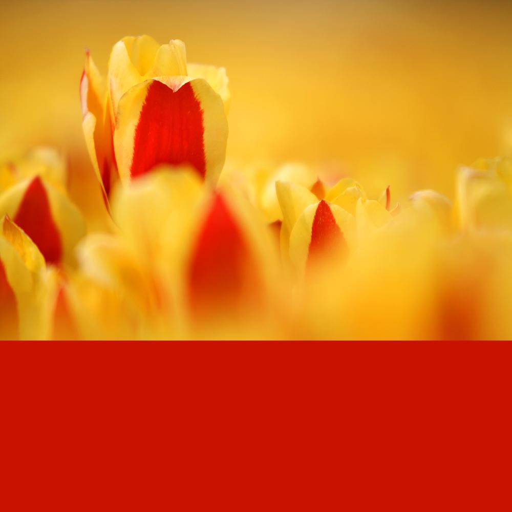 Frühling ...