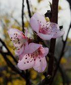 Frühling..