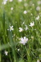 Frühling *-*