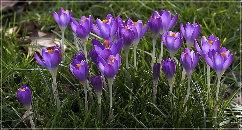 ... Frühling ...