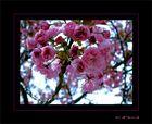 --Frühling--