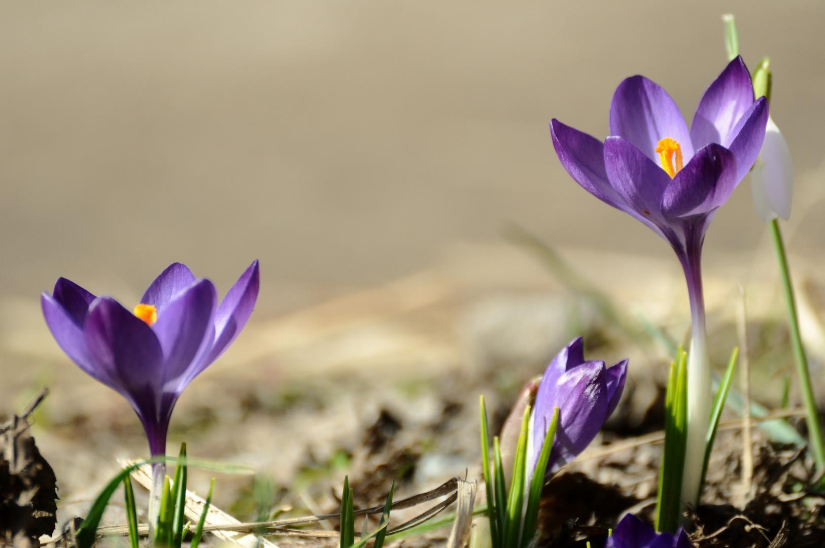 Frühling :-D