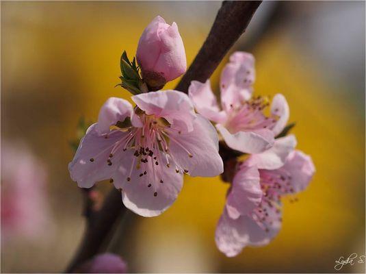...Frühling...