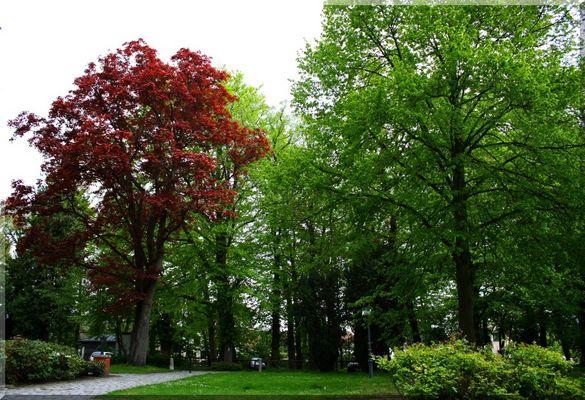 Frühling der Bäume