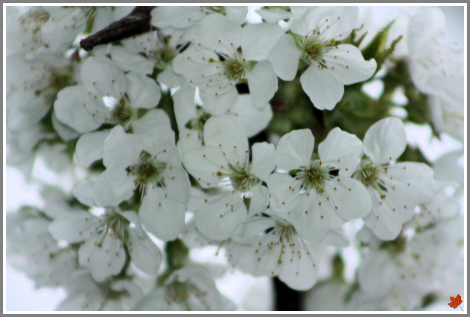 Frühling - die Dritte