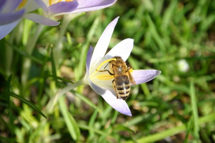 Frühling!!!!!!