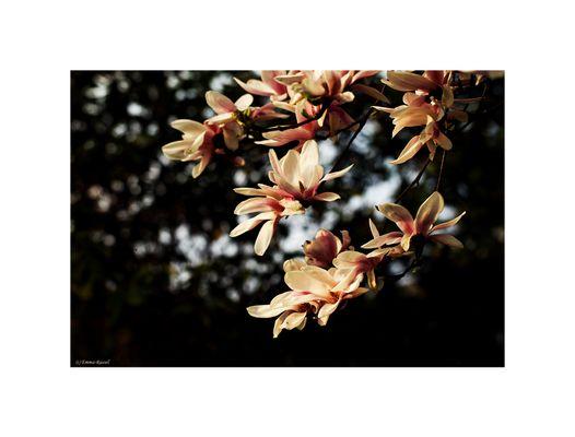 *Frühling....*