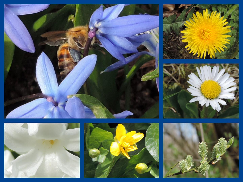 # Frühling...#
