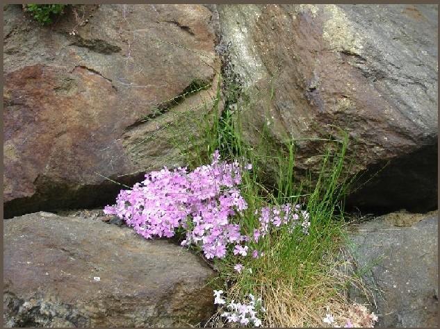 Frühling en Detail