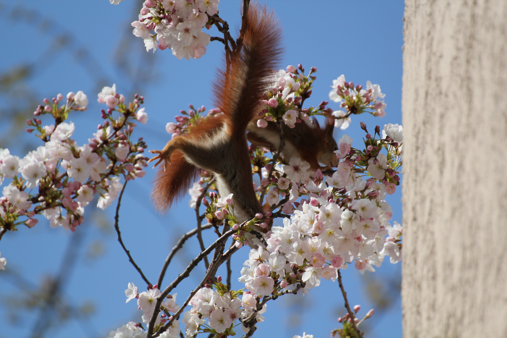Frühling erwache