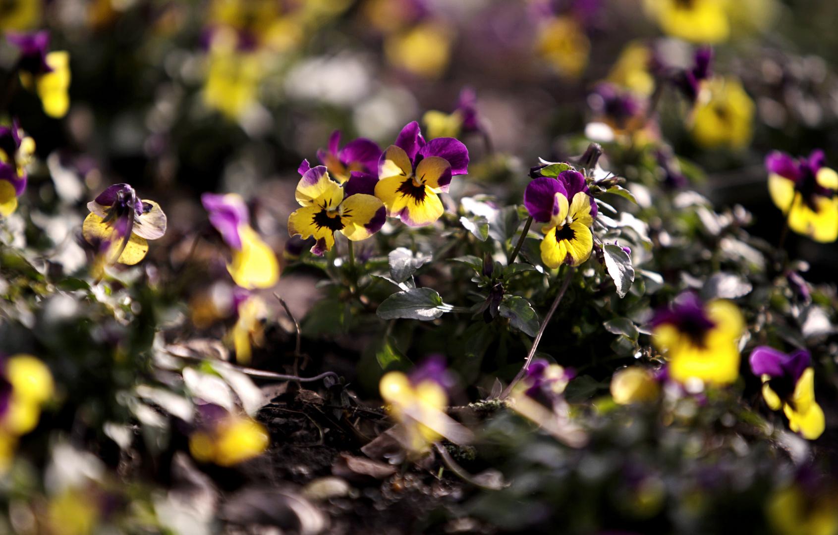 Frühling, erwache.