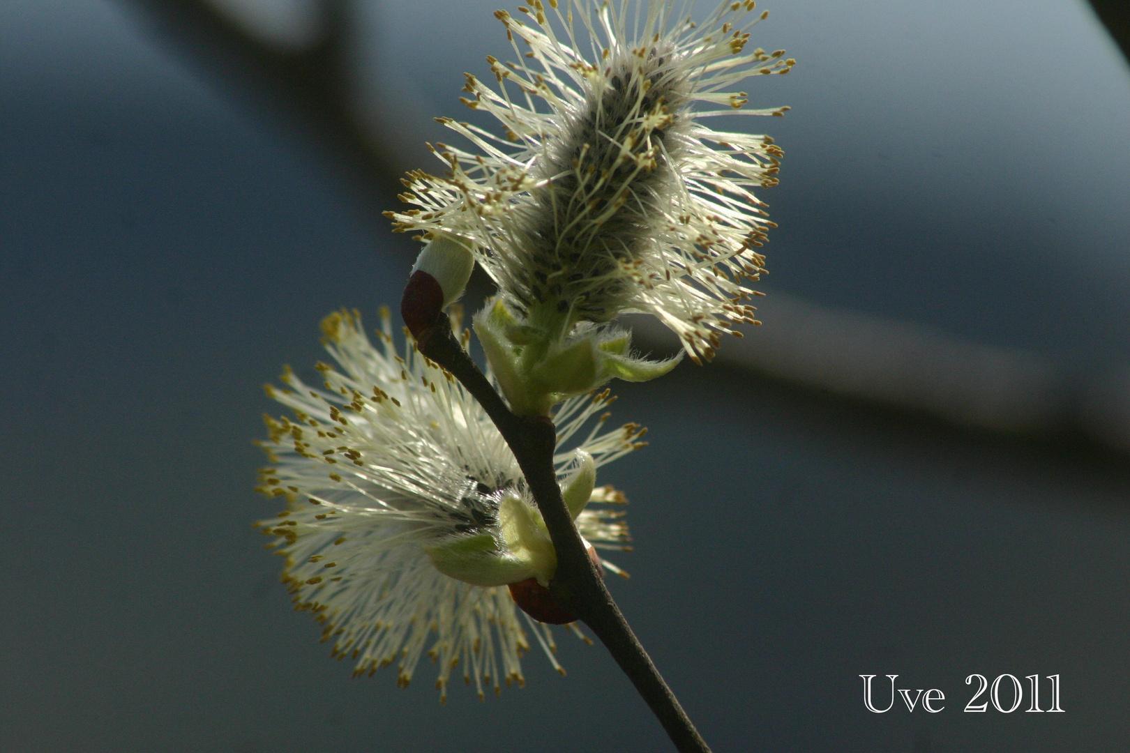 Frühling erwachen