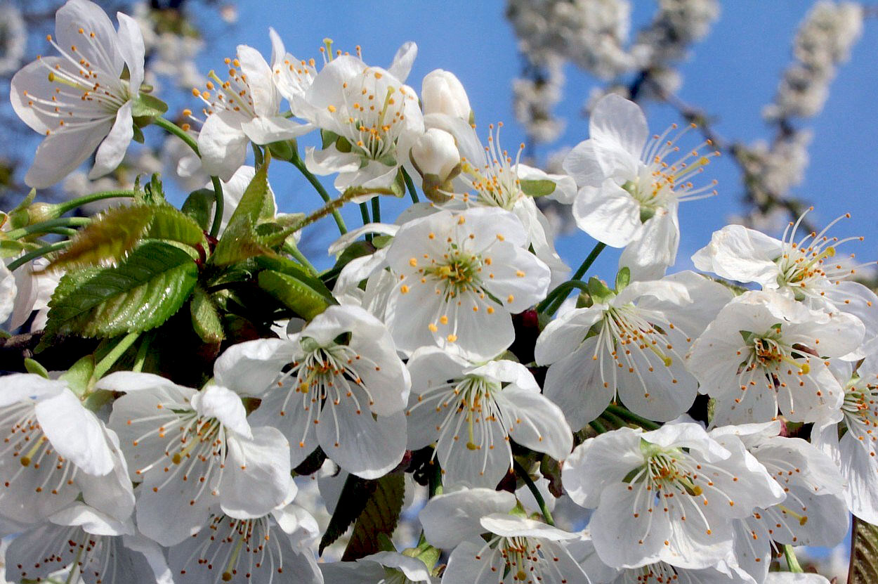 Frühling explodiert