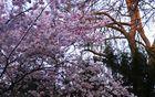 Frühling Farben