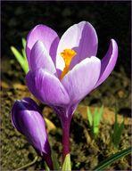 Frühling*