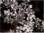 Frühling .. für Anfänger (13)