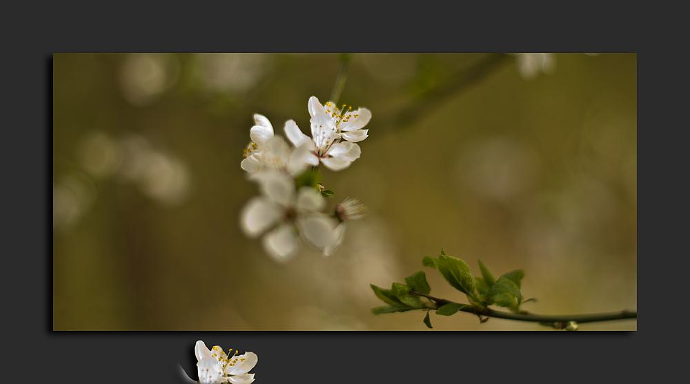 -Frühling- ganz zart -