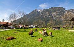 Frühling - Garmisch - Diashow