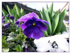 Frühling gegen Winter