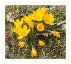 Frühling gelb