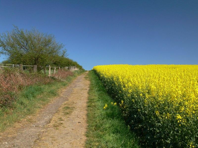 Frühling: Gelb-Grün-Blau
