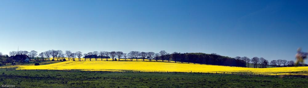 Frühling GelbBlau bei Sellin auf Rügen
