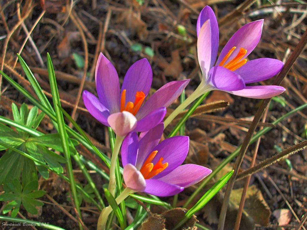 Frühling hält Einzug
