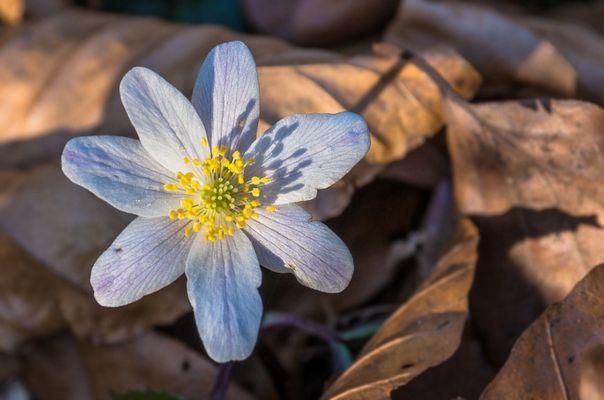 Frühling (Herbst)