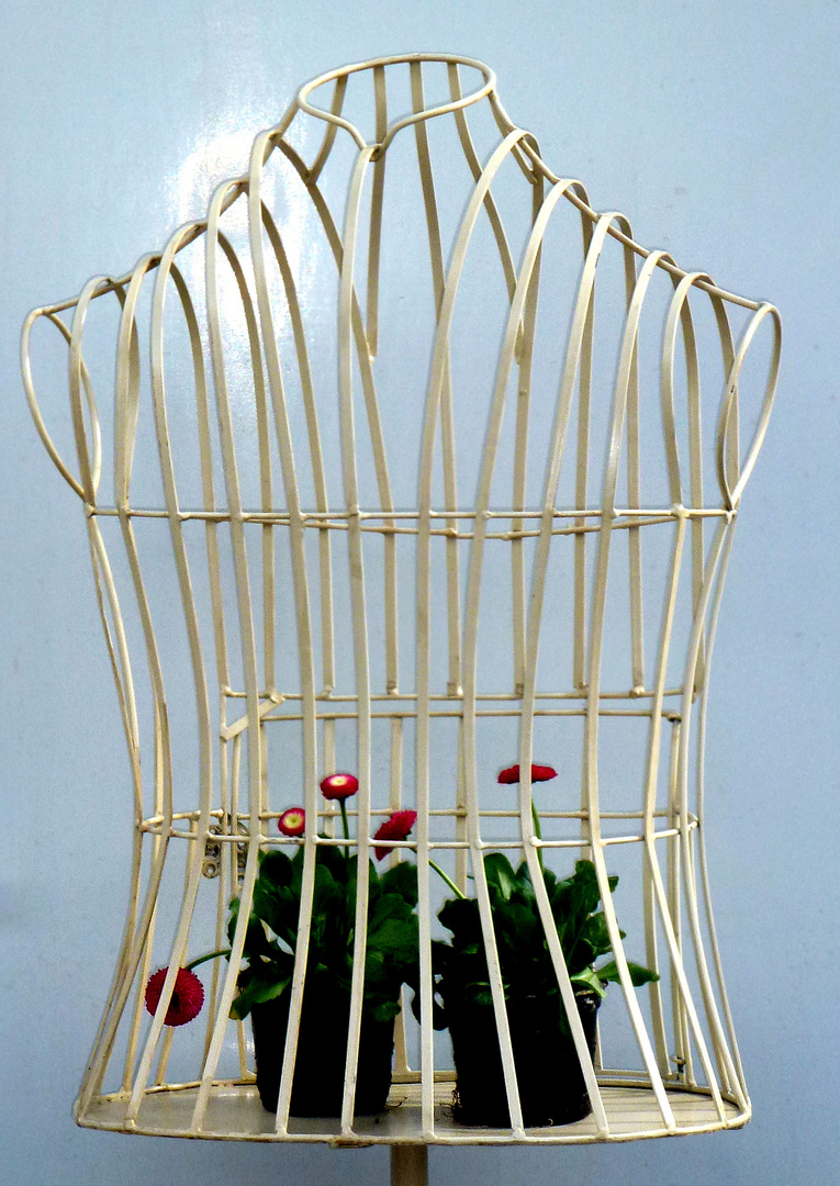 Frühling hinter Gittern....................