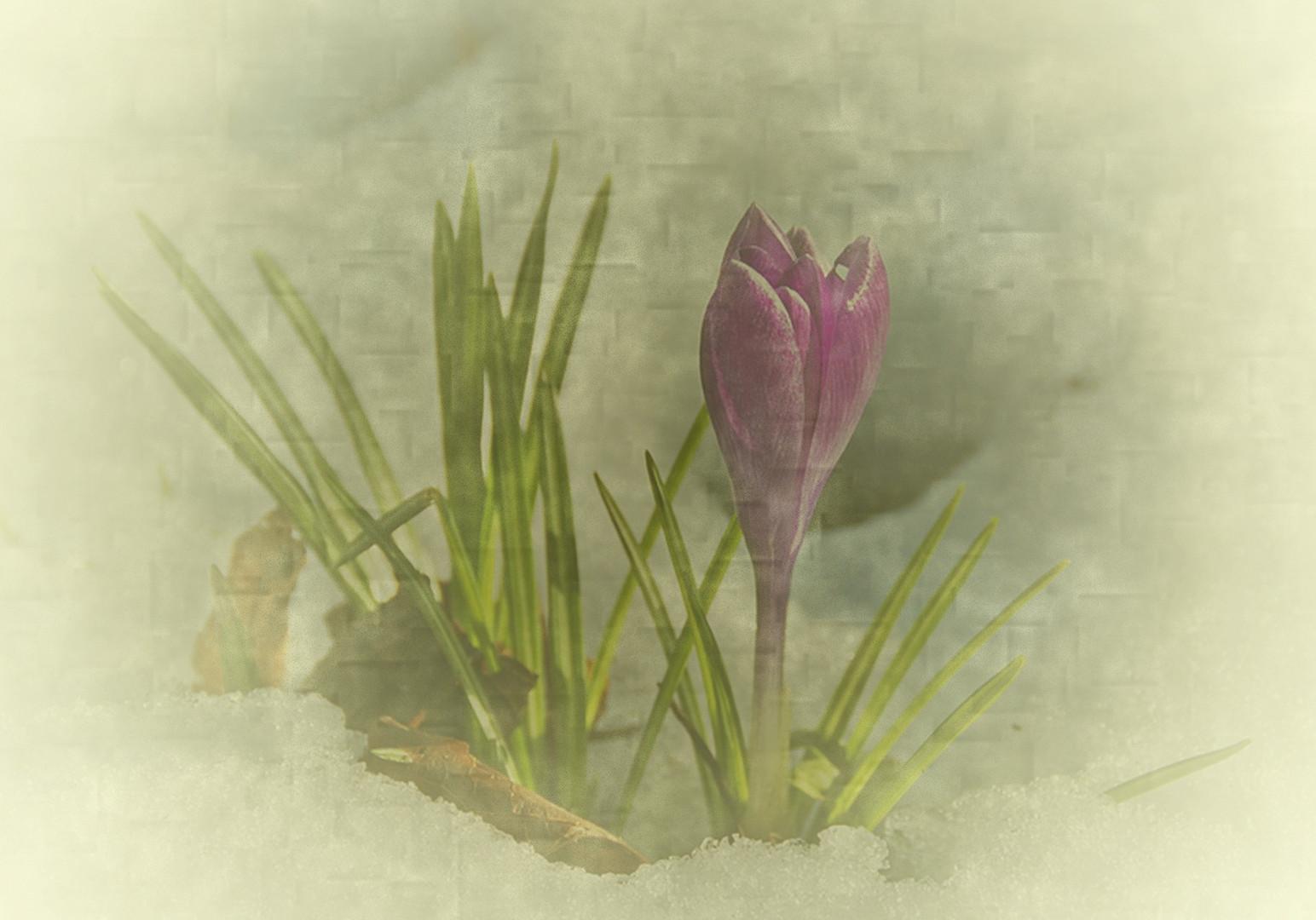 Frühling?? II