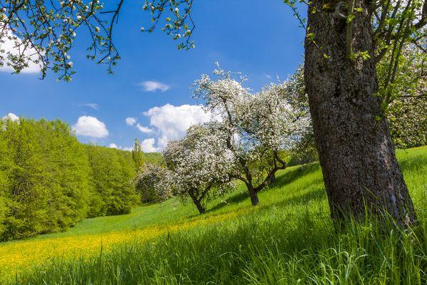 Frühling im Aichelbachtal