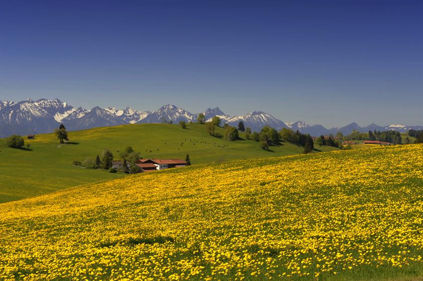 Frühling im Allgäu2