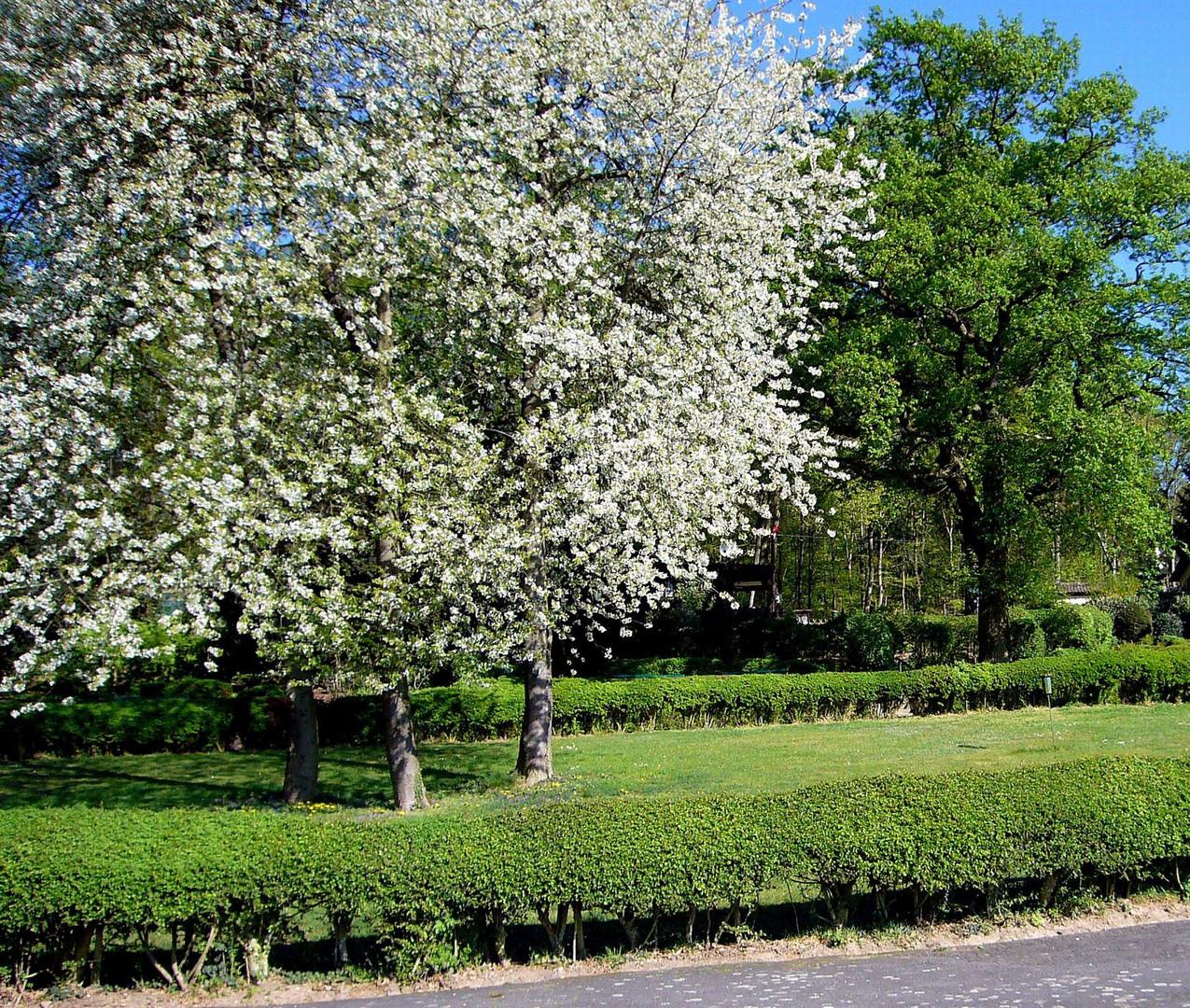 Frühling im April 2007
