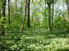 Frühling im Auwald